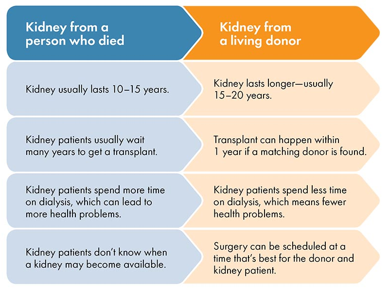 A chart comparing attributes of deceased donor kidney versus living donor kidney