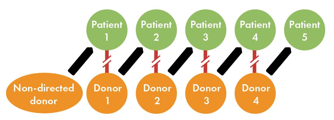 Basics of living donation – Explore Transplant